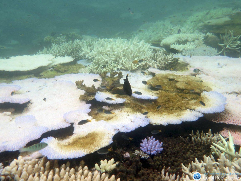 oceano coralli nuova zelanda cambiamenti climatici
