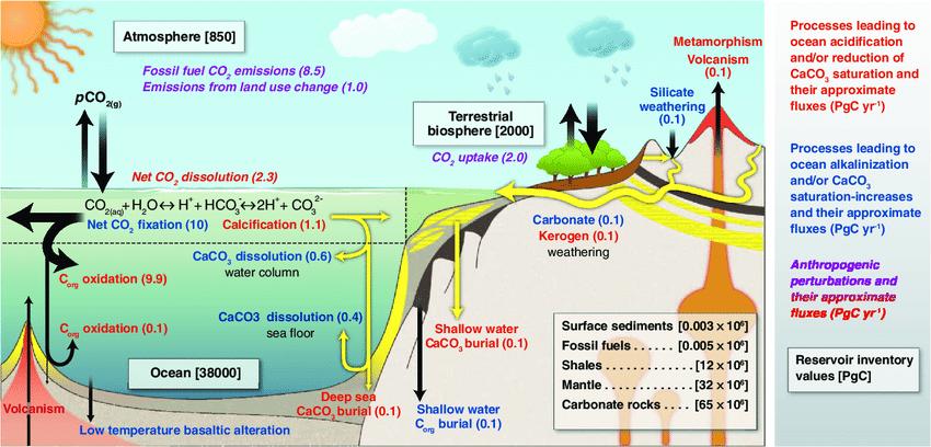 mediterraneo acidificazione