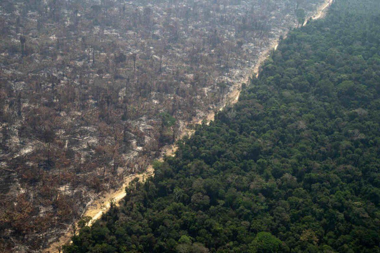 amazzonia incendi foresta deforestazione amazzonica