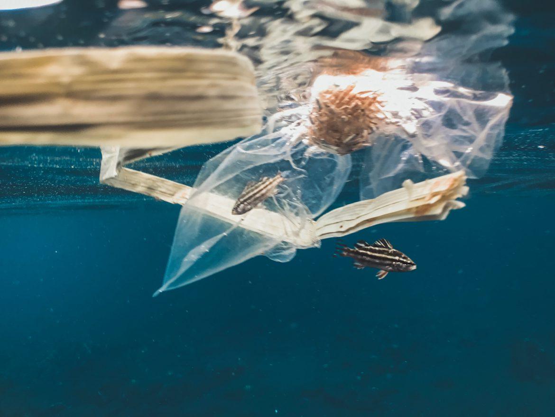 plastica mare inquinato