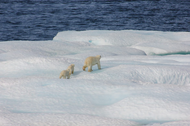 riscaldamento globale ghiacci artico