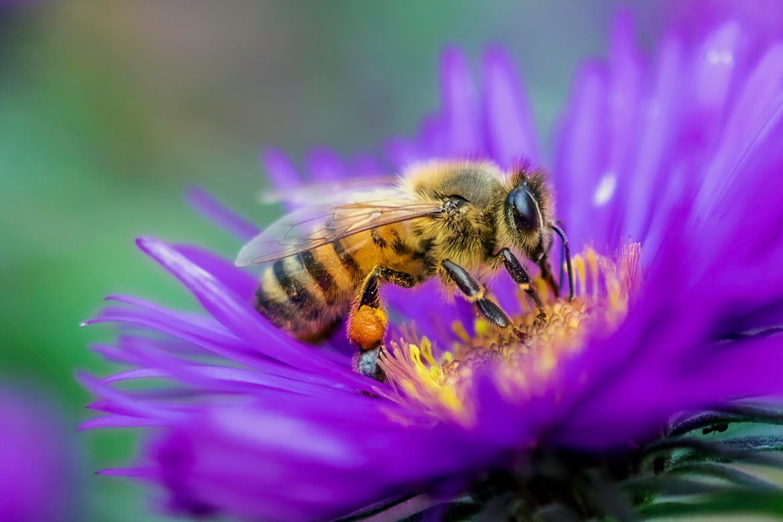 api insetticidi insetti