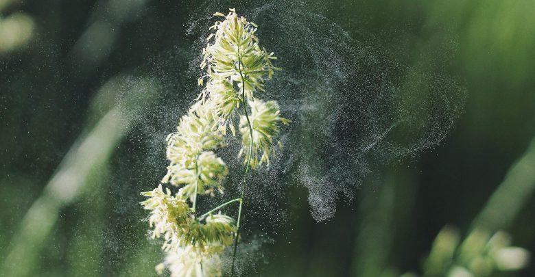 Allergia pollini cambiamenti climatici inquinamento
