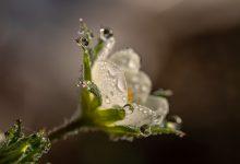 Pioggia in primavera
