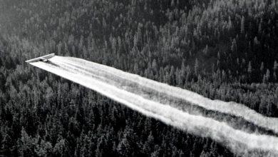 Il DDT affligge ancora le colture