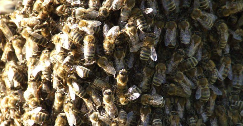clima comportamento animali api