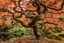 Giornata alberi