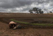 emergenza clima siccità, riscaldamento globale, cambiamenti climatici