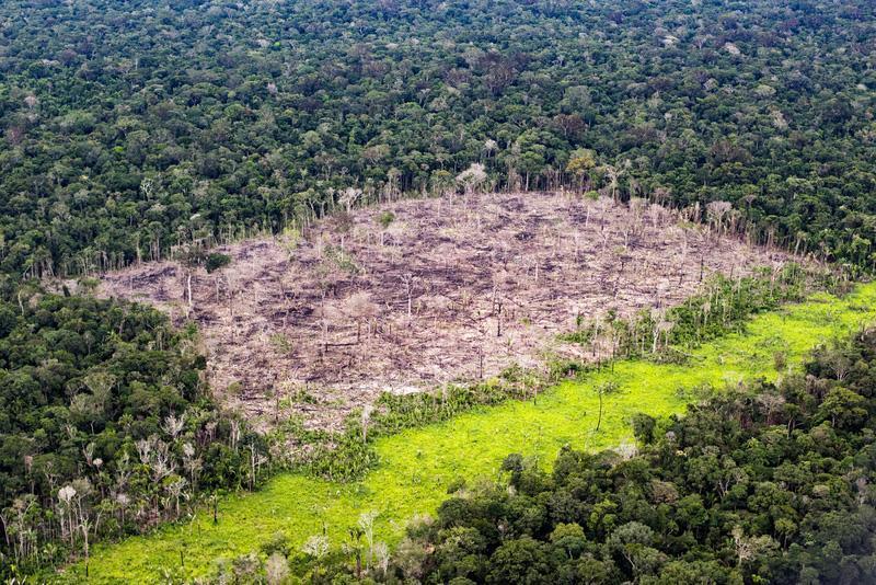 Amazzonia deforestazione