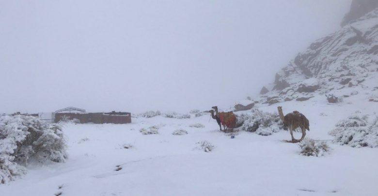neve deserto arabia saudita