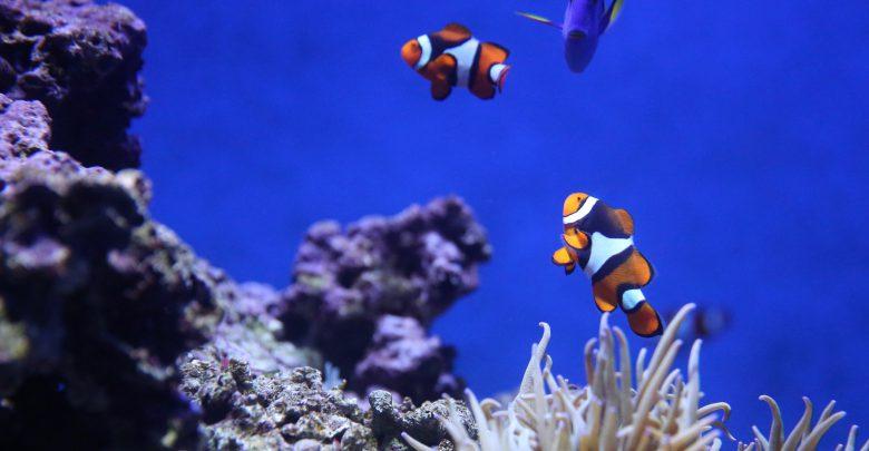 cambiamenti climatici oceano caldo