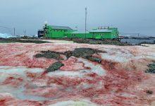 ghiaccio rosso antartide