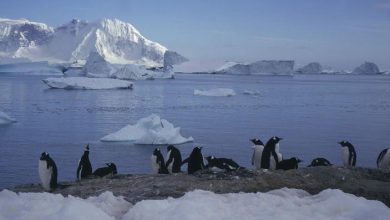 antartide ghiacci pinguini cambiamenti climatici