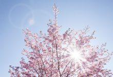 primavera febbraio