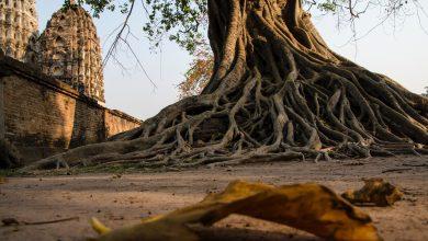 Thailandia siccità