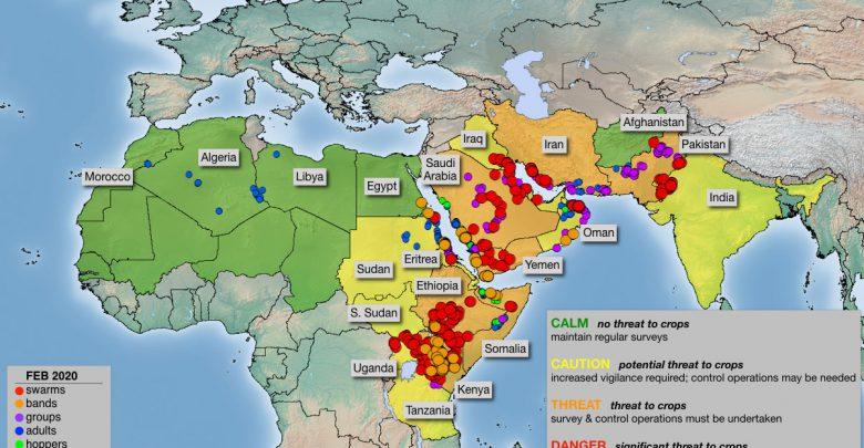 locuste invasione