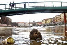 coronavirus città nutrie Milano