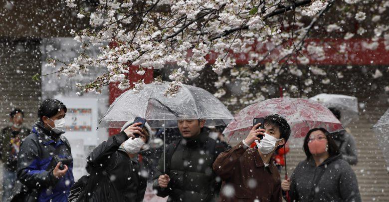 Tokyo ciliegi neve marzo 2020