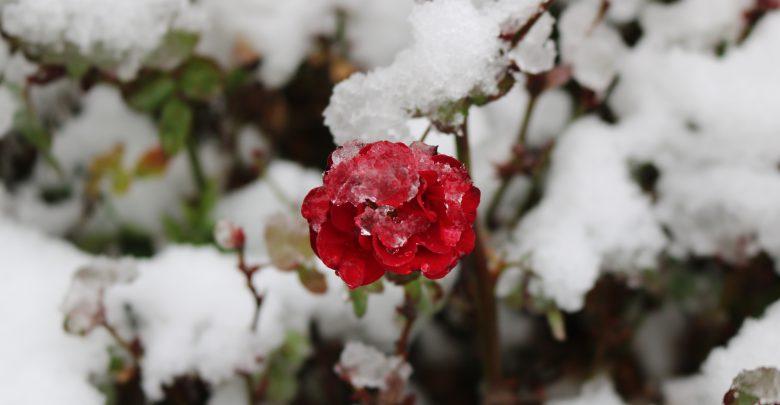 Primavera freddo meteo neve