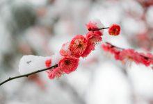 meteo freddo primavera