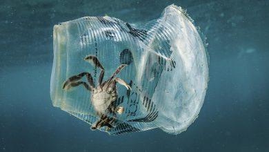 plastica mare oceani