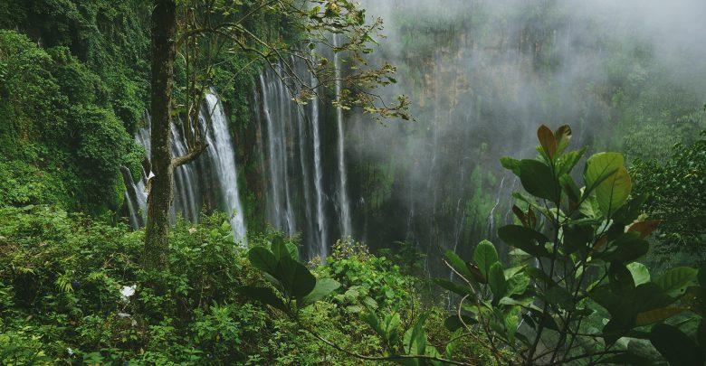 perdita foreste vergini
