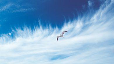 aria pulita vento
