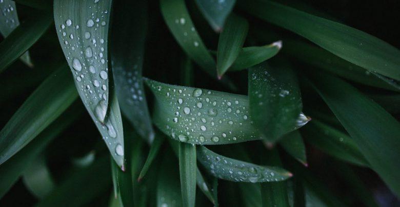 pioggia giugno