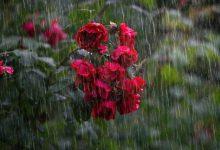 giugno 2020 pioggia