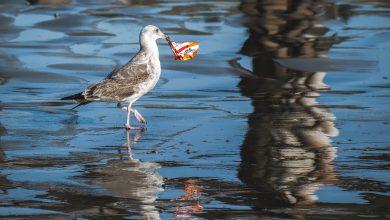 spiagge inquinate legambiente mare inquinamento