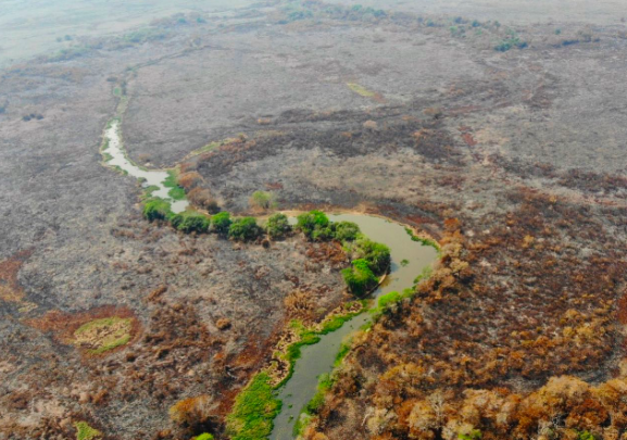 Brasile Pantanal