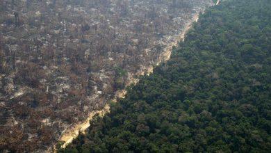 amazzonia foreste incendi foresta deforestazione amazzonica