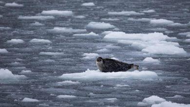artico ghiacci groenlandia