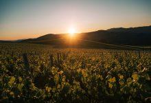 clima 2020 agosto caldo estate sole italia