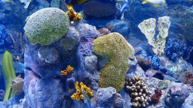 Scoperta in Australia una nuova barriera corallina alta mezzo chilometro