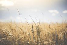La possibilità di alimentazione a rischio per il cambiamento climatico