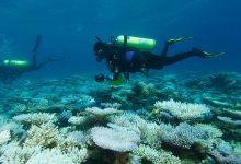 coralli barriera corallina