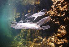 plastica microplastiche oceano mare inquinamento