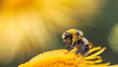 impollinatori api pesticidi strage