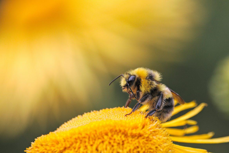 api pesticidi strage