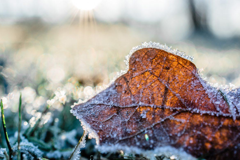 freddo ghiaccio