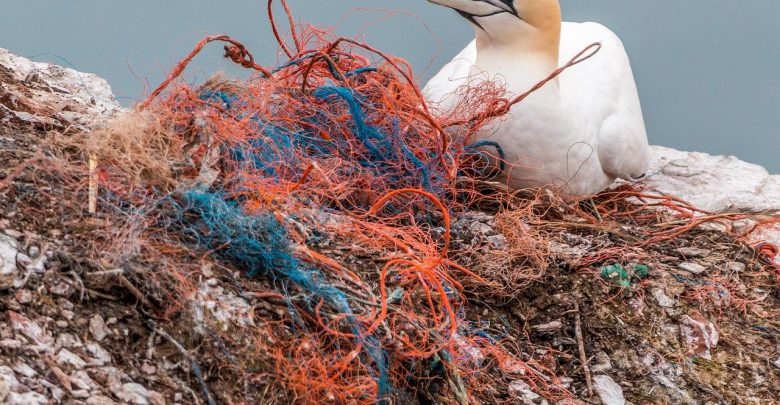 plastica mare inquinato rifiuti