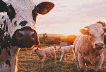 emissioni accordo di parigi agricoltura allevamento