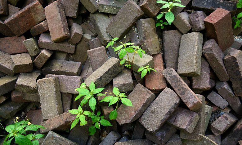 biomassa antropocene