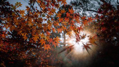 clima novembre