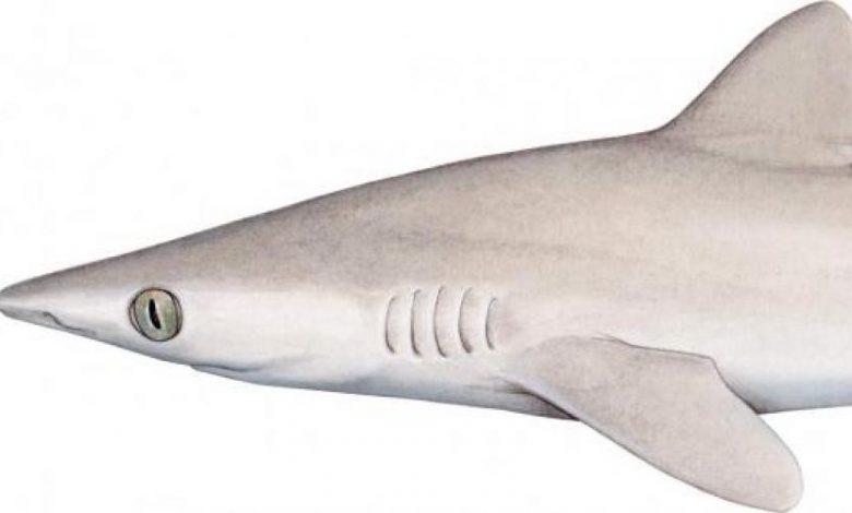 squalo biodiversità