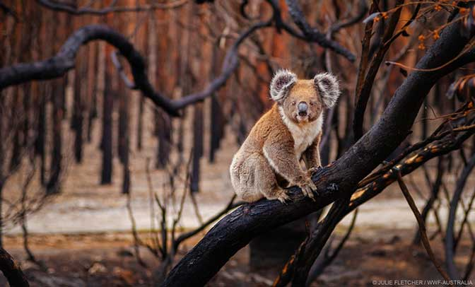 incendi australia clima
