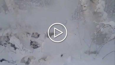 incendi zombie in Siberia