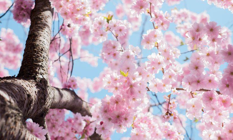 meteo primavera