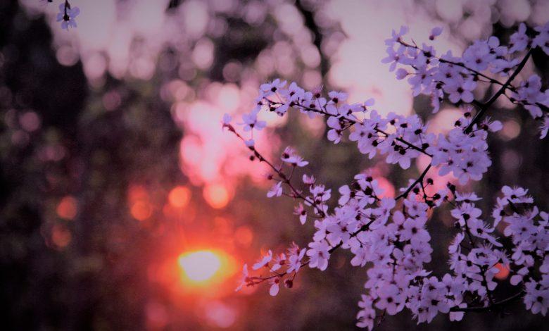 meteo marzo